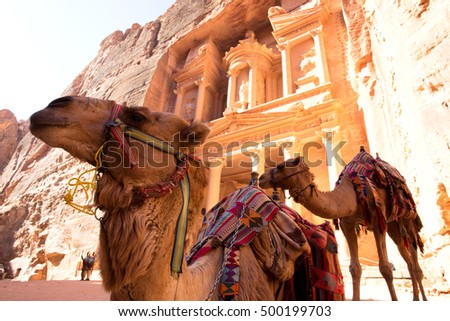 Camel in front of The Treasury (Al Khazneh) in Petra Ancient City, Jordan