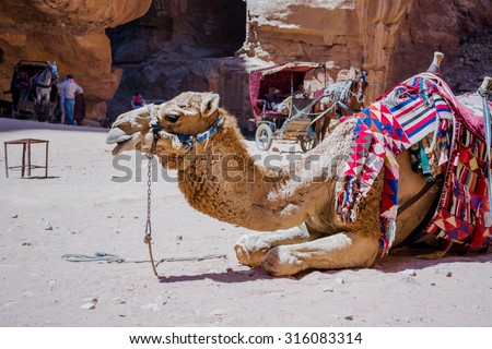 camel in Petra canyon