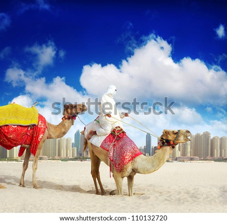 Camel on Dubai, United Arab Emirates