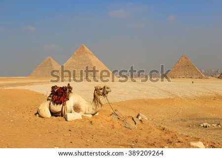 Camel relaxing at The Pyramids of Giza, man-made structures from Ancient Egypt in the golden sands of the desert with polluted Cairo in the background
