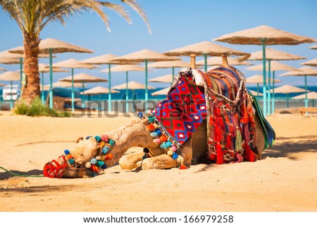 Camel resting in shadow on the beach of Hurghada, Egypt - stock photo