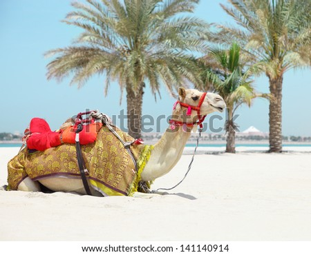 Camel resting in shadow on the beachin a sunny day - stock photo
