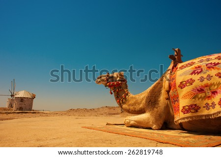 camel resting under the scorching sun - stock photo
