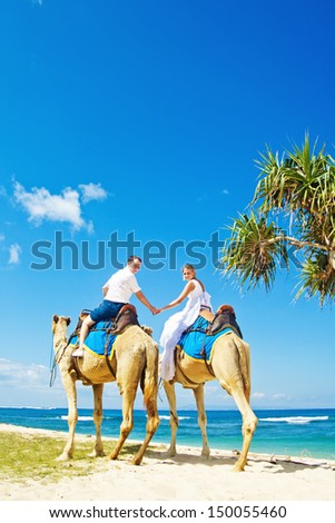 camel ride on wedding day - stock photo