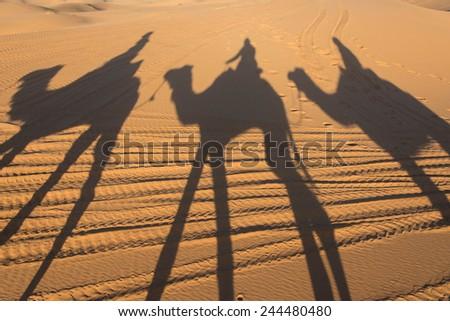 Camel shadow on the sand dune in Sahara Desert - stock photo