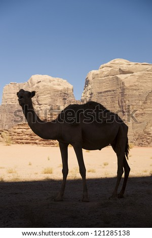 Camel Silhouette, Wadi Rum - stock photo