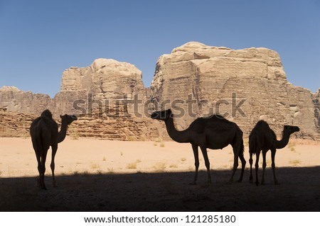 Camel Silhouettes, Wadi Rum - stock photo