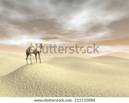 Camel standing in the desert by brown sunset - 3D render - stock photo