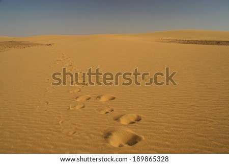 Camel traces in the desert