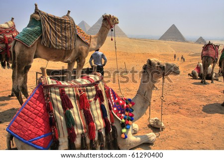 Camels and Giza Pyramids, Cheops, Chephren and Mykerinos, Egypt (HDR photo) - stock photo
