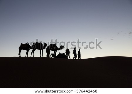 camels and their drivers on the sand dunes of the desert of Merzouga, Morocco