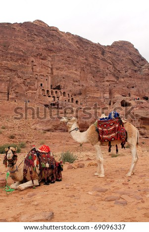 Camels at Petra, Urn Tomb in the background, Lost rock city of Jordan. Petra's temples, tombs, theatres and other buildings are scattered over 400 square miles. UNESCO world heritage site - stock photo