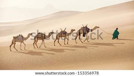 Camels caravan in Sahara desert - stock photo