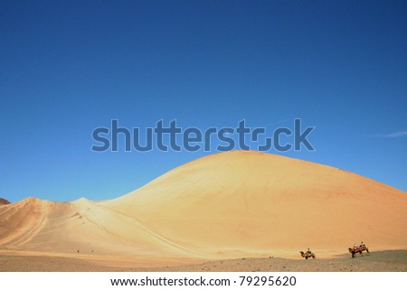 Camels in China - stock photo