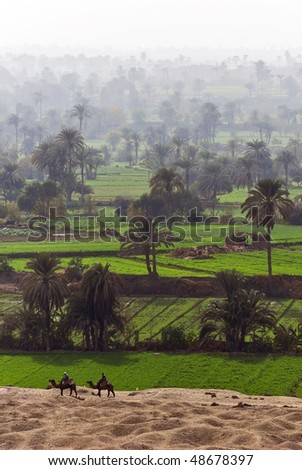 Camels in Fayoum Oasis, Egypt - stock photo