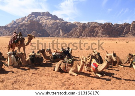 Camels in Wadi Rum, Jordan. - stock photo