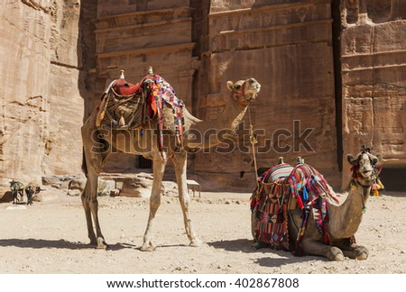 Camels near Royal tombs. Petra. Jordan.  - stock photo
