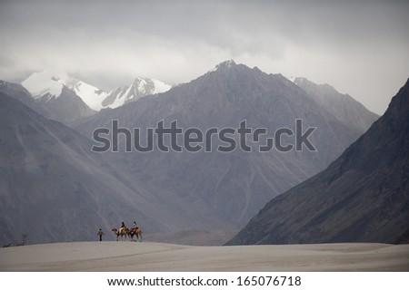 camels on sand desert, nubra valley, india - stock photo