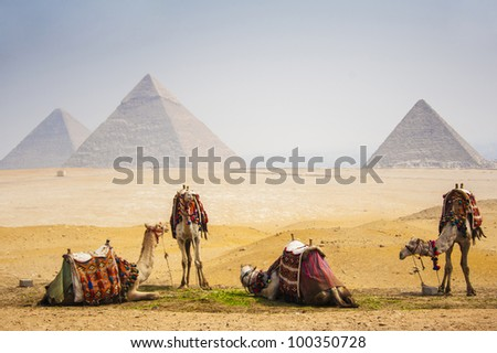 Camels with pyramid - stock photo