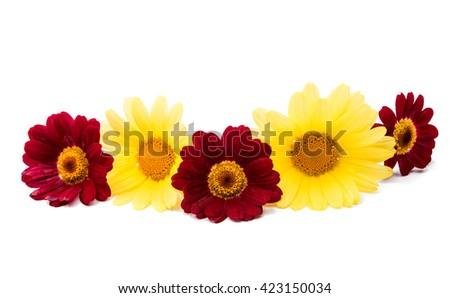 camomile flowers isolated on white background - stock photo