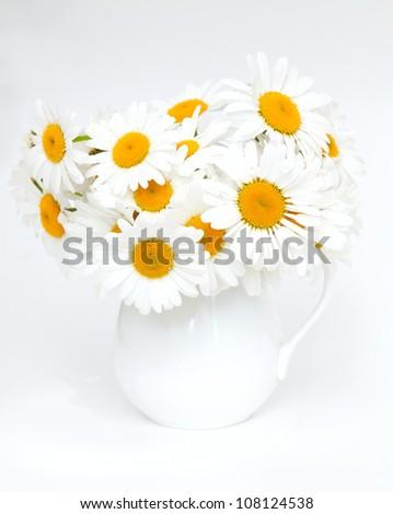camomile flowers on white background - stock photo