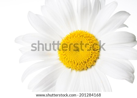 Camomile on white background. Daisy. Beautiful  white flower. Nice image, wallpaper, textures,  greeting cards