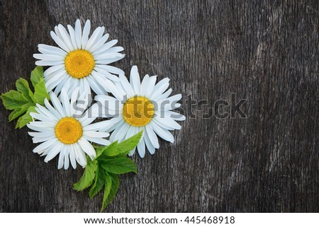 Camomiles on a background of old wood. Summer background, texture. - stock photo