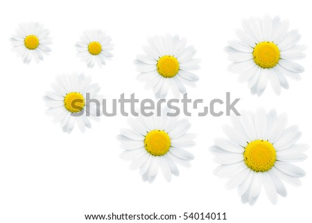 camomiles on white background - abstract - stock photo