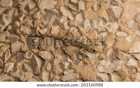Camouflaged Lizard over stone background - stock photo