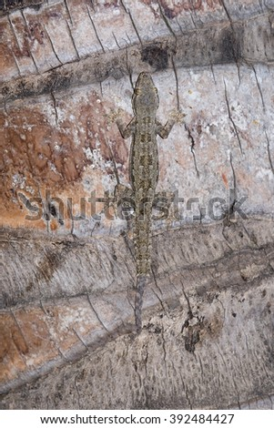 camouflaged of lizard