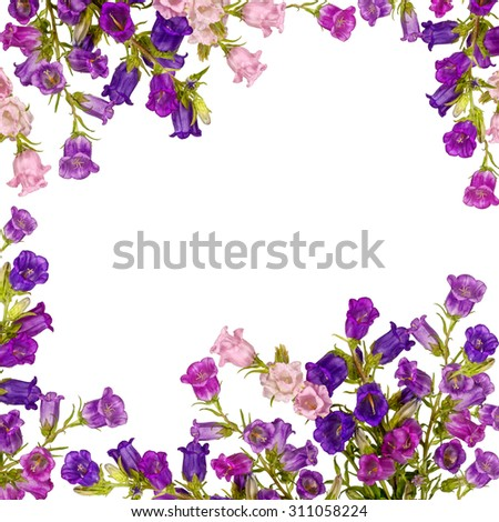 Campanula Flowers. Beautiful  hand-bell isolated on white background - stock photo