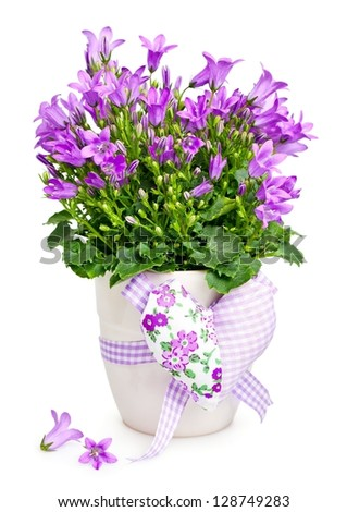 Campanula flowers in a  pot decorated with a heart .