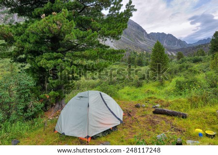 Camping tent under Siberian Pine. Mountain Valley - stock photo