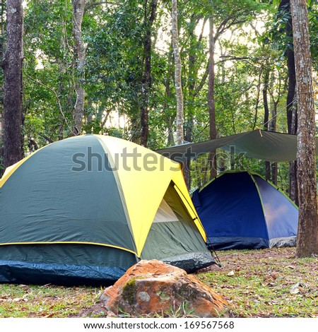 Camping tent underneath big trees in national park. - stock photo