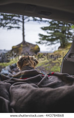 Camping with dogs. - stock photo