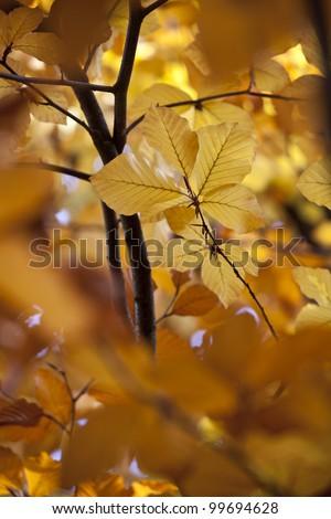 Campo de Moro gardens in autumn, Madrid, Spain - stock photo