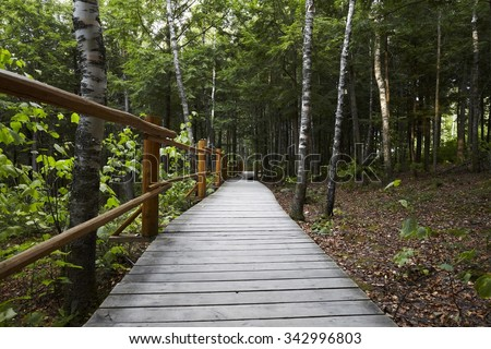 Canada forest with path into the wood
