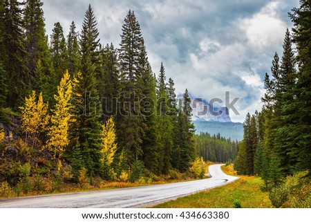 Evergreens Stock Images Royalty Free Images Amp Vectors