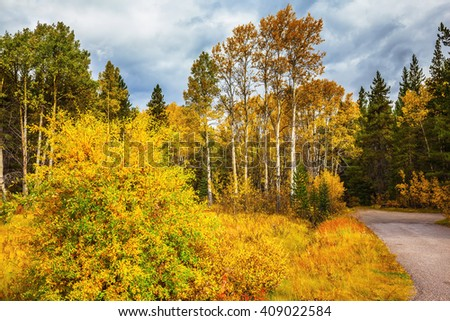 "Canada, the Rocky Mountains. Fine ""Indian summer"" in Banff National Park. Highway among orange grass and evergreen trees - stock photo"