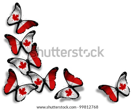 Canadian flag butterflies, isolated on white background - stock photo
