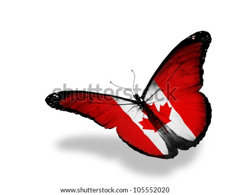 Canadian flag butterfly flying, isolated on white background - stock photo
