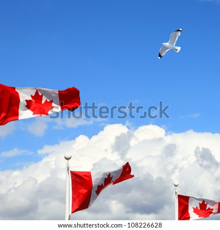 Canadian flags fluttering in the wind and white seagull over Vancouver. British Columbia,Canada - stock photo