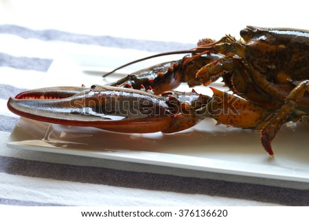 Canadian lobster preparing for cooking in the dish