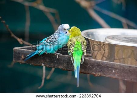 canary - stock photo