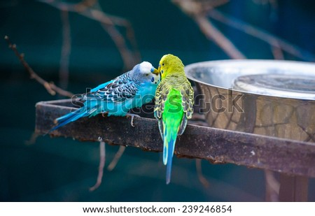 canary - stock photo