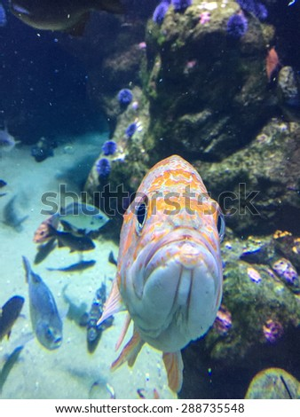 Canary rockfish (Sebastes pinniger) is a rockfish of the Pacific coast, found from south of Shelikof Strait in the eastern Gulf of Alaska to Punta Colnett in northern Baja California.