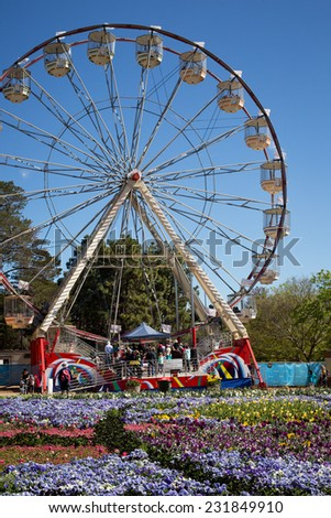 CANBERRA, AUSTRALIA - OCTOBER 1 2014: Tulips at Canberra's Floriade Festival, Australia's biggest celebration of Spring.