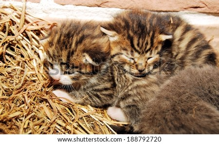 Candid picture of baby kittens - stock photo