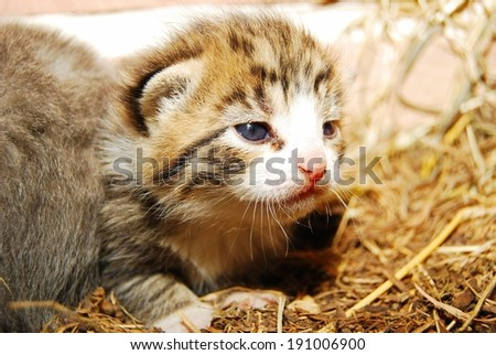 Candid picture of newborn kittens - stock photo