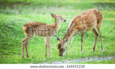 Candid shot of two little deers playing